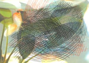 gold-fish-2